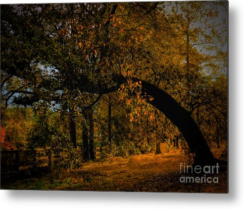 Art Prints Metal Print featuring the photograph Sunny Fall Afternoon by Dave Bosse
