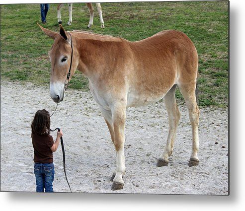 Mule Metal Print featuring the photograph Trust by Brenda Donko