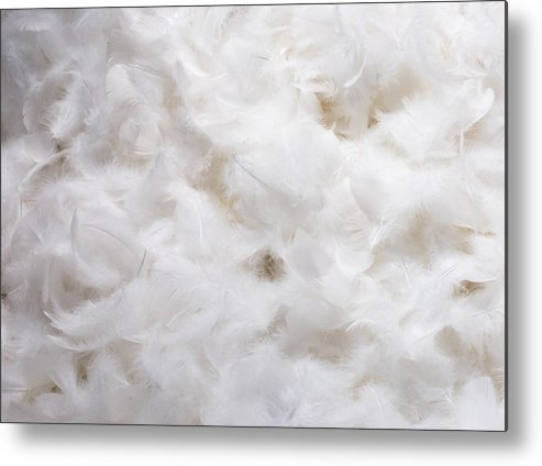 Texture Metal Print featuring the photograph White Feathers by Chay Bewley