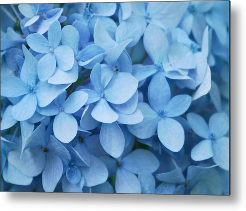Horizontal Metal Print featuring the photograph Blue Hydrangea Close-up by Daniela Duncan