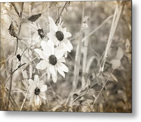 Flowers Photograph Metal Print featuring the photograph Daytime Beauties by Ester Rogers
