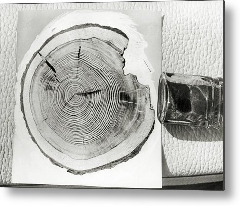 Growth Ring Metal Print featuring the photograph Growth Rings On A Tree From Tunguska by Ria Novosti