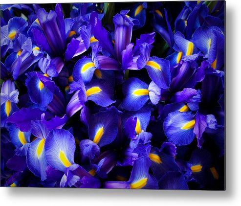 Pike Place Market Metal Print featuring the photograph Iris by Lynn Wohlers