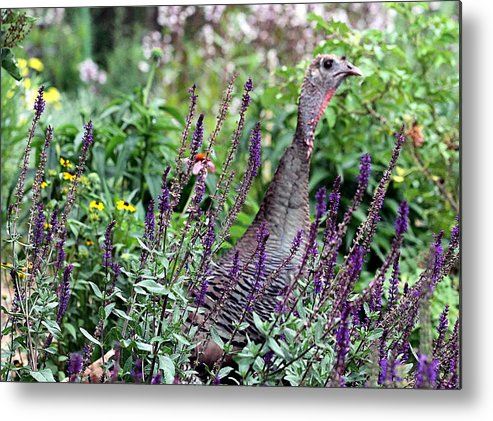 Turkey Metal Print featuring the photograph Turkey Flowers by Elizabeth Winter