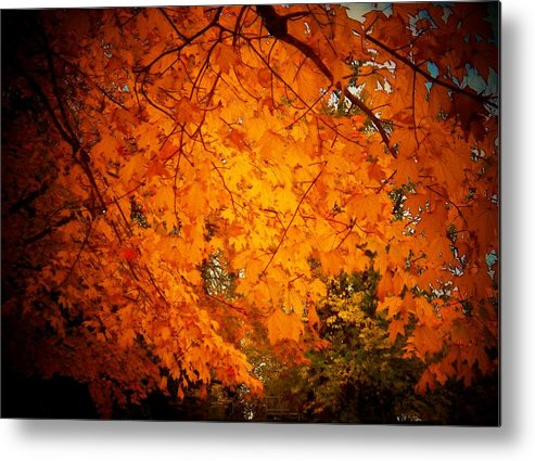 Autumn Metal Print featuring the photograph Upperville Leaves by Joyce Kimble Smith