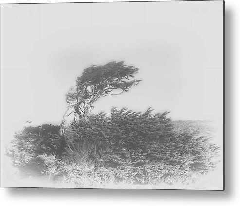 Wind Shaped Trees On The Coast Of Northern California Metal Print featuring the photograph Shaped By Nature by Michael Body