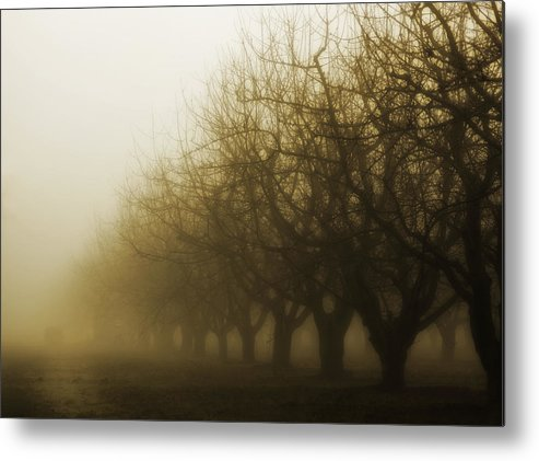 Sepia Metal Print featuring the photograph Orchard In Fog by Rebecca Cozart