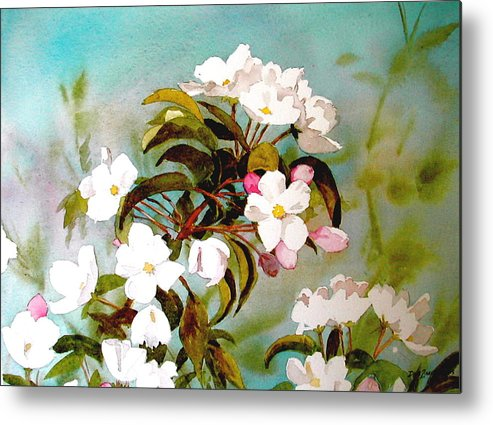 Blossoms Metal Print featuring the painting Apple Blossoms by Faye Ziegler