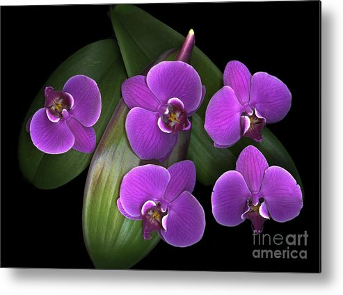 Purple Metal Print featuring the photograph Bees On Green by Christian Slanec