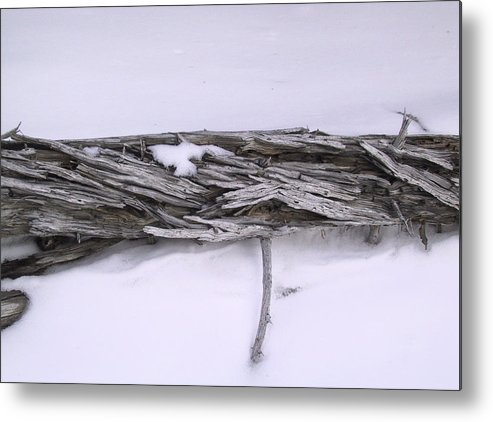 Tree Metal Print featuring the photograph Blue Banff-14 by Kevin Callahan