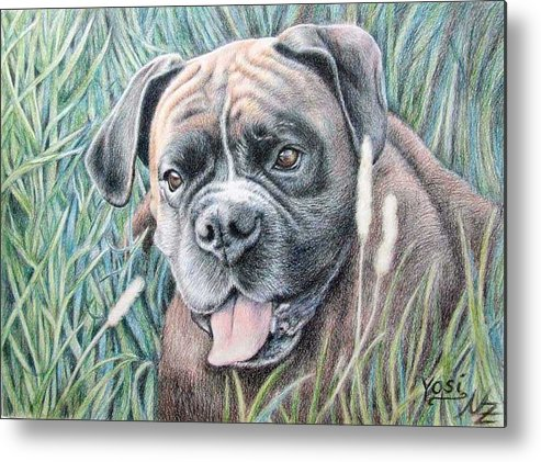 Dog Metal Print featuring the drawing Boxer Yosi by Nicole Zeug