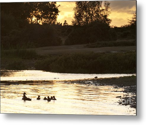 New Forest Metal Print featuring the photograph By The Lake by Angel Ciesniarska