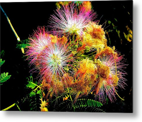 Nature Metal Print featuring the photograph Care For A Mimosa by Johann Todesengel