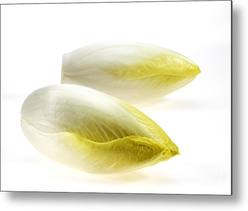 Botany Metal Print featuring the photograph Chicory by Gerard Lacz
