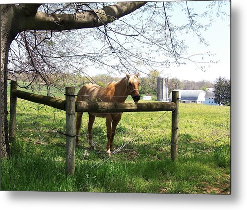 Horse Metal Print featuring the photograph Country by Cassandra Dice