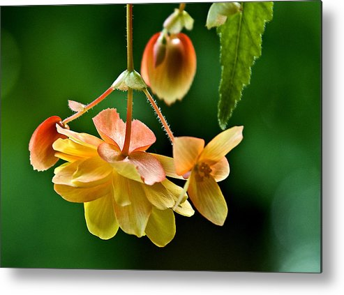 Flower Metal Print featuring the photograph Hanging Flower by Pat Carosone