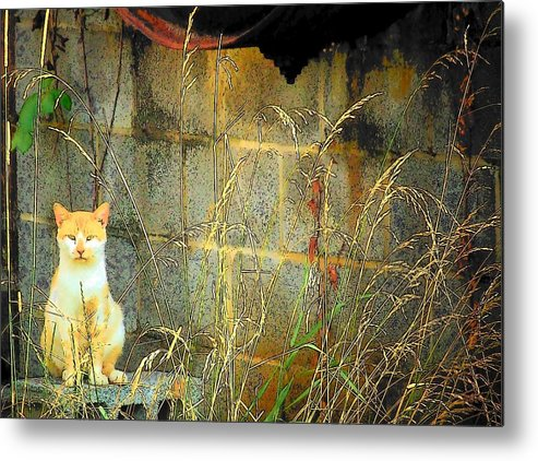 Cat Metal Print featuring the photograph Here Kitty Kitty Kitty by Michael L Kimble