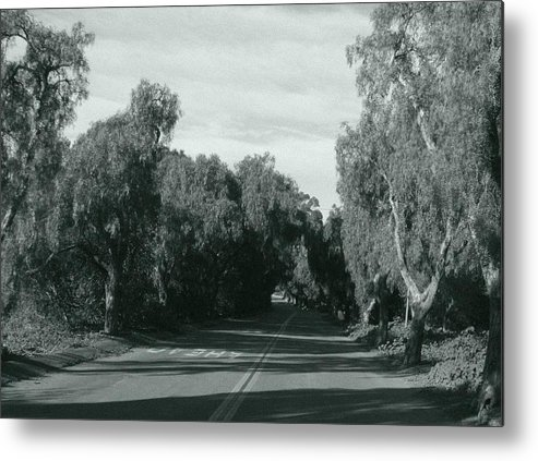 Landscape Metal Print featuring the photograph Lifes Path by Shari Chavira