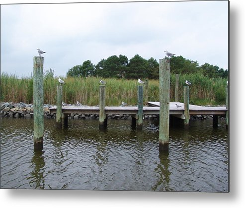Assawoman Bay Metal Print featuring the photograph Look Left by Kevin Callahan