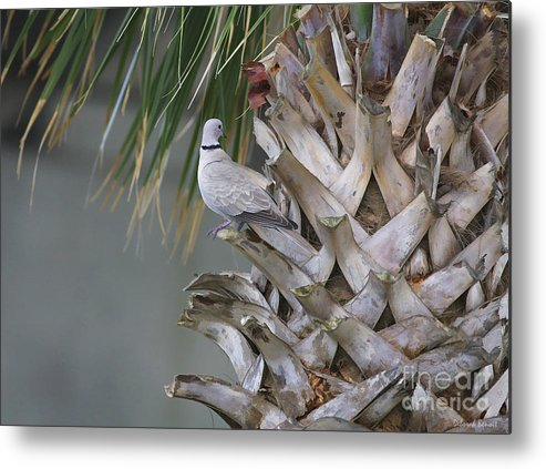 Palm Metal Print featuring the photograph My Own Palm Tree by Deborah Benoit