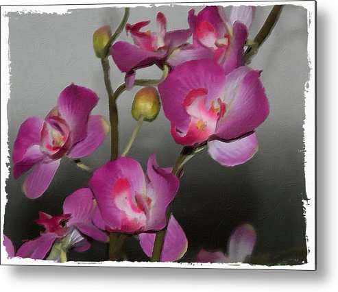 Orchids Metal Print featuring the photograph Orchids by Linda ONeill