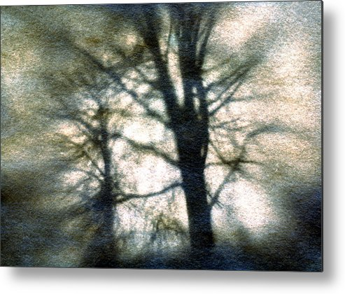 Trres Metal Print featuring the photograph Original Tree by Diana Ludwig