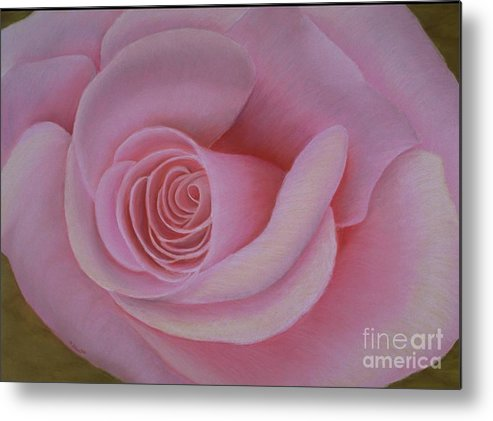 Rose Metal Print featuring the painting Pink Blush by Mary Erbert
