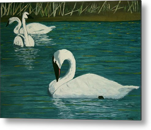 Swans Metal Print featuring the painting Preening Swans by Robert Tower