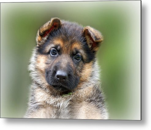 Puppies Metal Print featuring the photograph Puppy Portrait by Sandy Keeton