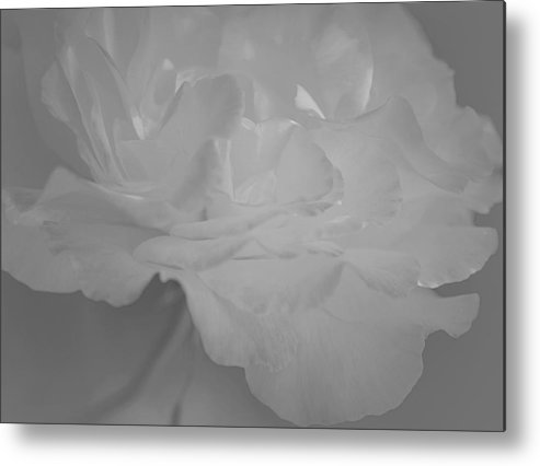Rose Art Metal Print featuring the photograph Pure Sincerity by The Art Of Marilyn Ridoutt-Greene
