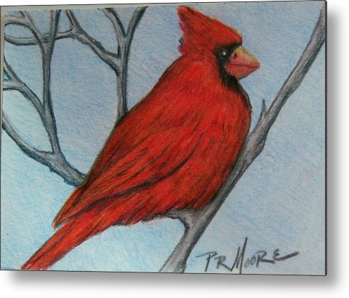 Bird Metal Print featuring the drawing Red Fluff by Patricia R Moore