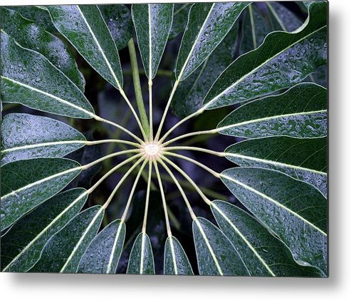 Plant Metal Print featuring the photograph Secret by Mitch Cat