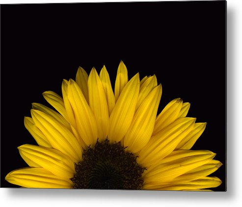 Scanography Metal Print featuring the photograph Sunflower Rising by Deborah J Humphries