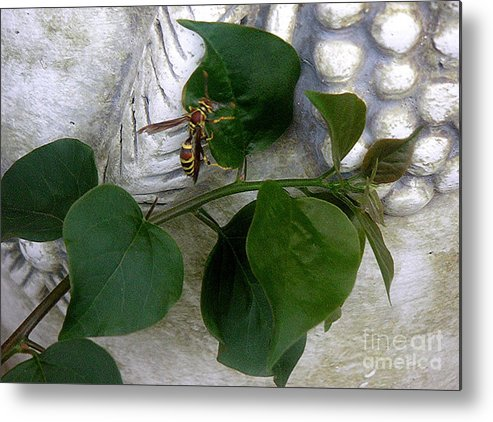 Nature Metal Print featuring the photograph The Visitor by Lucyna A M Green