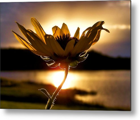 Flower Metal Print featuring the photograph Uplifting by Karen M Scovill
