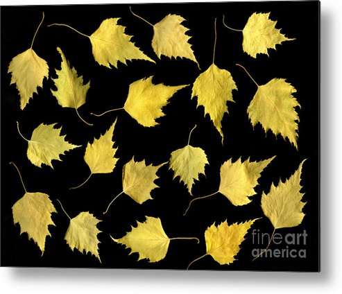 Scanography Metal Print featuring the photograph When Leaves Grow Old by Christian Slanec