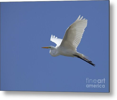 Freedom Metal Print featuring the photograph Wide Open Freedom by Daniel Earnhardt
