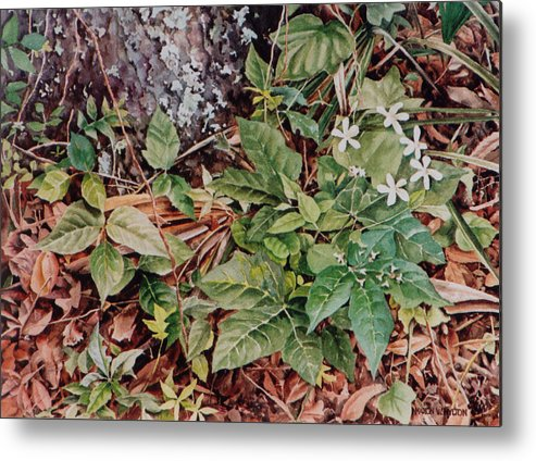 Flowers Metal Print featuring the painting Woodland Blossoms by Marion Hylton