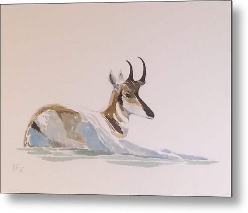 Western Wildlife Metal Print featuring the painting Young Pronghorn by Robert Fugate