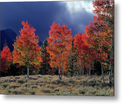 Idaho Scenics Metal Print featuring the photograph Aspen Light by Leland D Howard