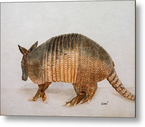 Armadillo Metal Print featuring the drawing Armadillo by Zina Stromberg
