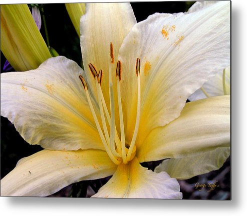 Flower Photography Metal Print featuring the photograph Beauty by George Tuffy