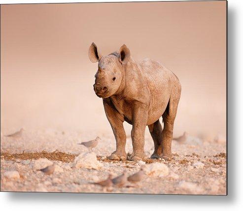 Wild Metal Print featuring the photograph Black Rhinoceros Baby by Johan Swanepoel