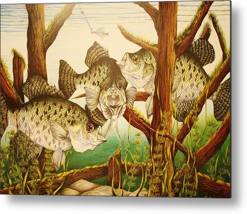 Fishing Metal Print featuring the drawing Captivating Crappies by Bruce Bley