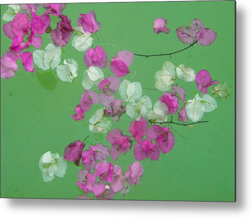 Pink Metal Print featuring the photograph Floating Petals by Patricia Kantrowitz