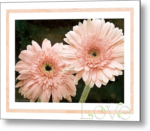 Gerber Metal Print featuring the photograph Gerber Daisy Love 5 by Andee Design