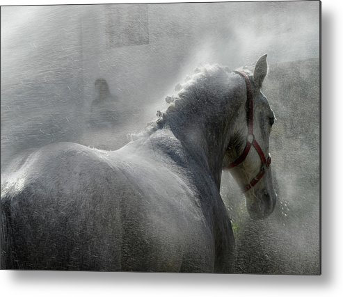 Lipicanci Metal Print featuring the photograph Gramy by Milan Malovrh