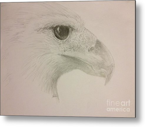 Harpy Eagle Metal Print featuring the drawing Harpy Eagle Study by K Simmons Luna