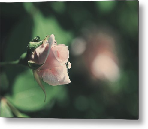 Flowers Metal Print featuring the photograph It'll Be Alright by Laurie Search