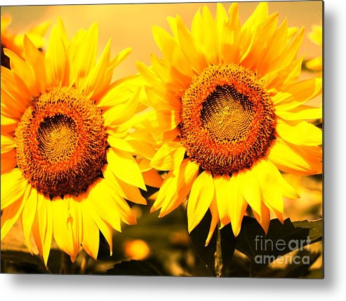 Sunflower Metal Print featuring the photograph Just Two by Kathleen Struckle